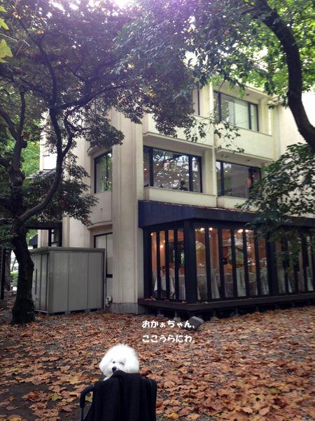 写真 2012-11-13 11 20 43