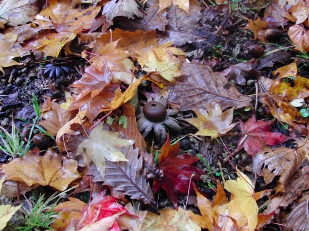 落ち葉とキノコ