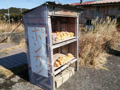 ¥100ポンカン