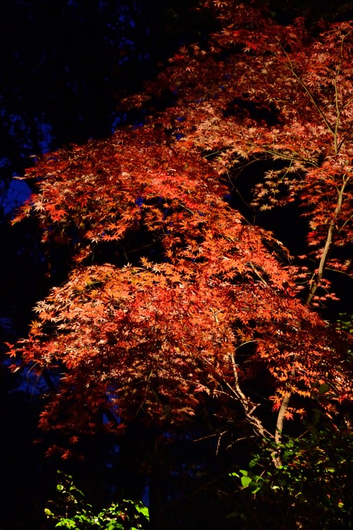 睡足軒の森7