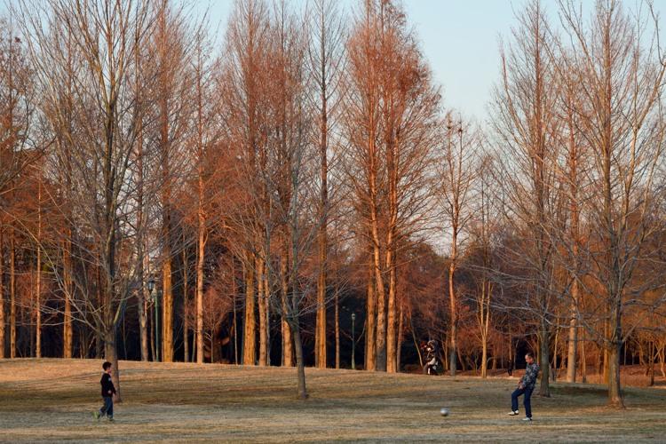 彩の森入間公園5