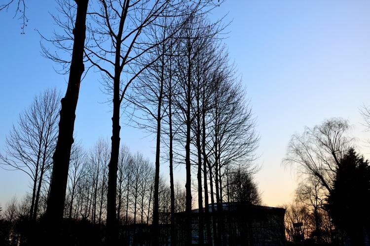 彩の森入間公園3(夕景6)