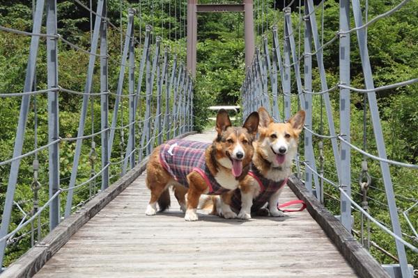 つり橋の上で記念撮影