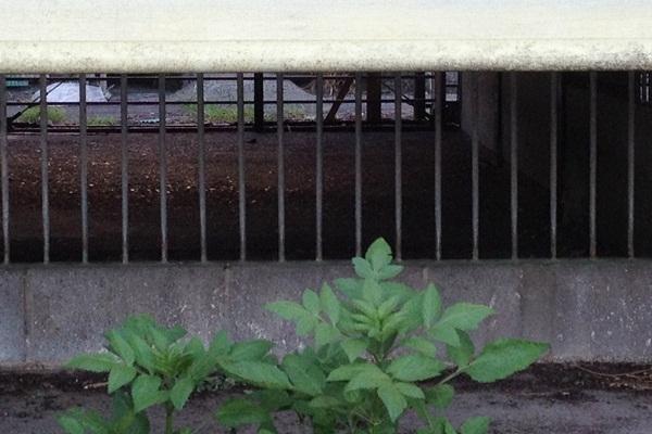 20120816-07.jpg