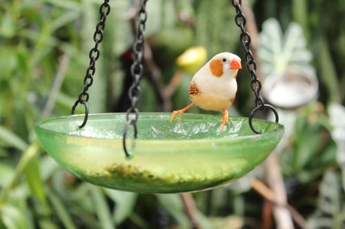 bird2_20120623155930.jpg