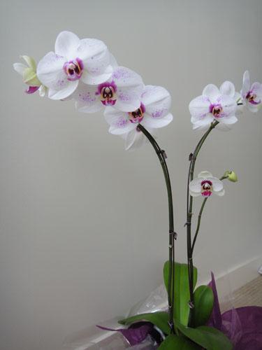 flower1_20120702041416.jpg