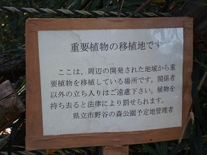 2011_1211_140519-DSC05077.jpg