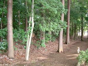 2010_0620_0835松ヶ丘