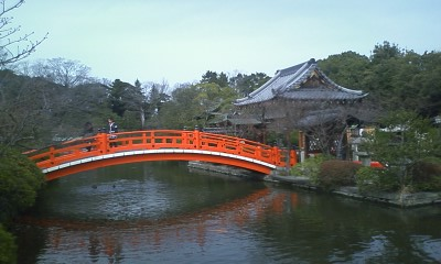 神泉苑の梅の花3