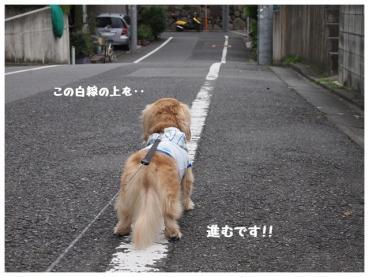 1-1_20120623193934.jpg