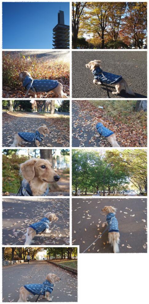 20121125駒沢あ散歩♪