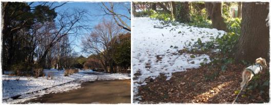 駒沢あ散歩6
