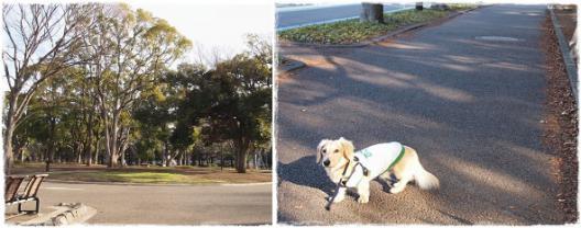 駒沢あ散歩-5