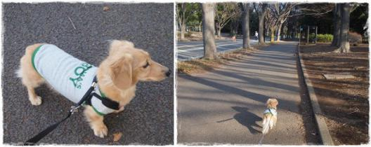 駒沢あ散歩ー6