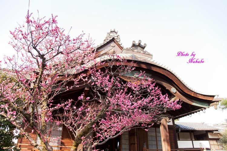 Higashiyama-Hanatouro_16.jpg