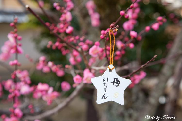 Higashiyama-Hanatouro_18.jpg