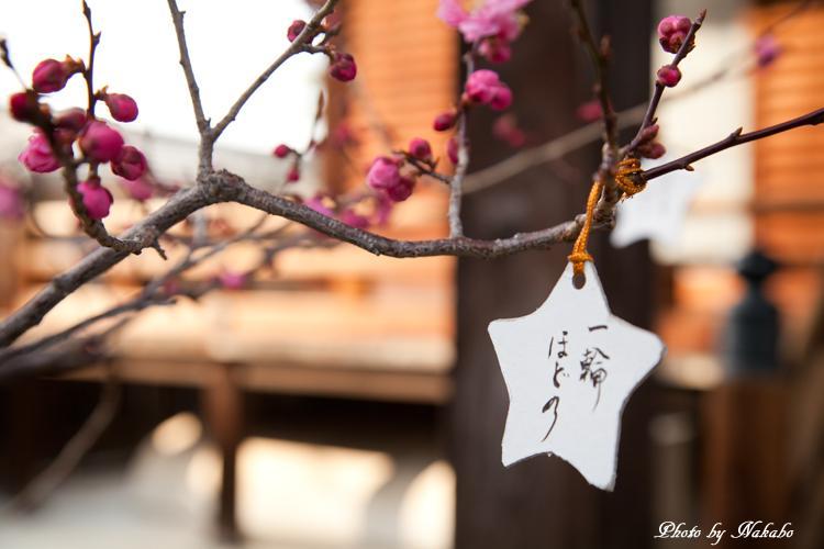 Higashiyama-Hanatouro_19.jpg
