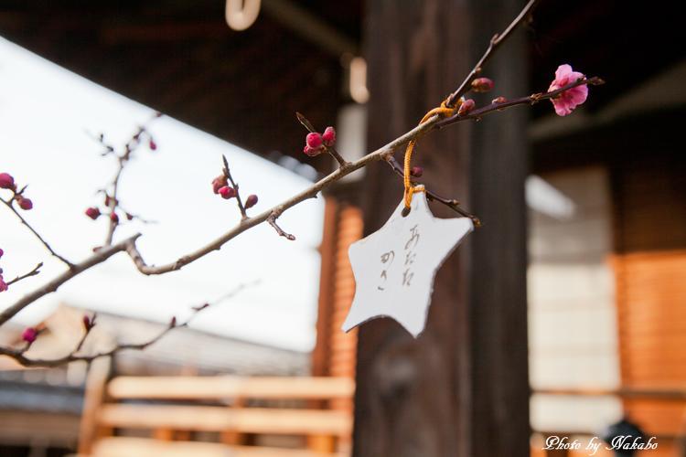 Higashiyama-Hanatouro_20.jpg