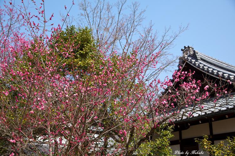 Higashiyama-Hanatouro_4.jpg