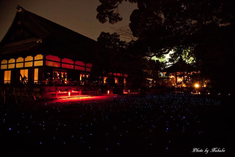 Higashiyama-Hanatouro_42.jpg