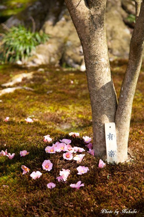 Higashiyama-Hanatouro_7.jpg
