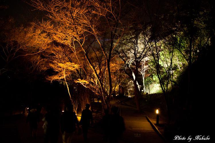 Higashiyama-Hanatouro_79.jpg