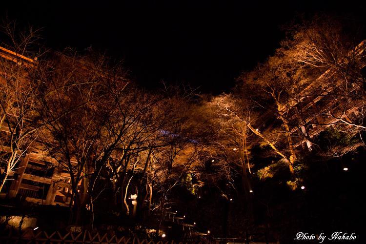 Higashiyama-Hanatouro_80.jpg