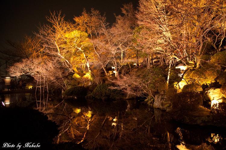 Higashiyama-Hanatouro_81.jpg