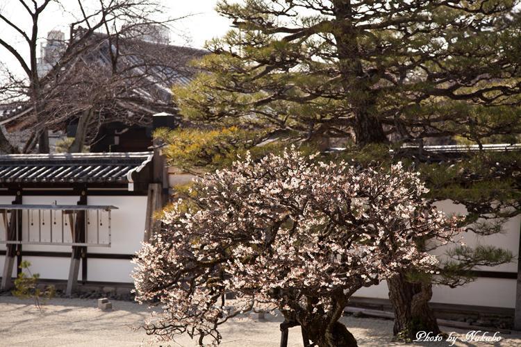 Higashiyama-Hanatouro_96.jpg