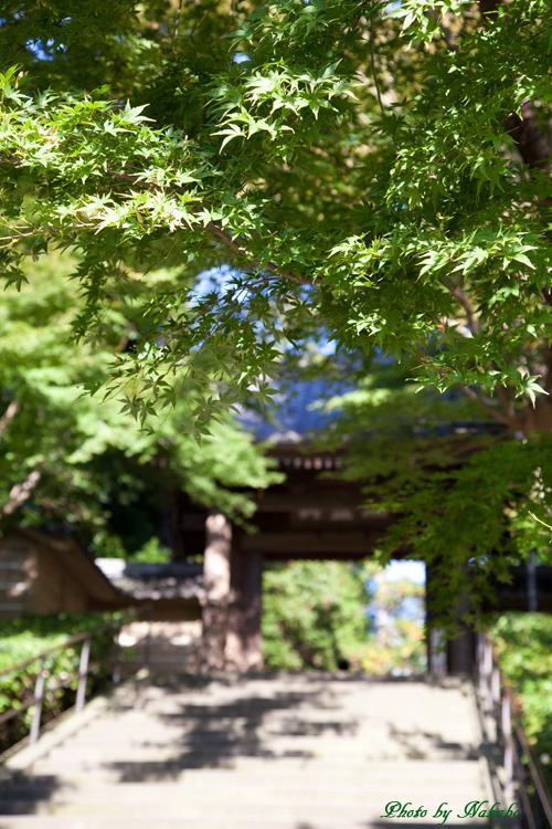 Kamakura-Koten-1.jpg