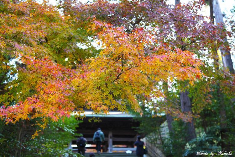 Kita-Kamakura_1.jpg