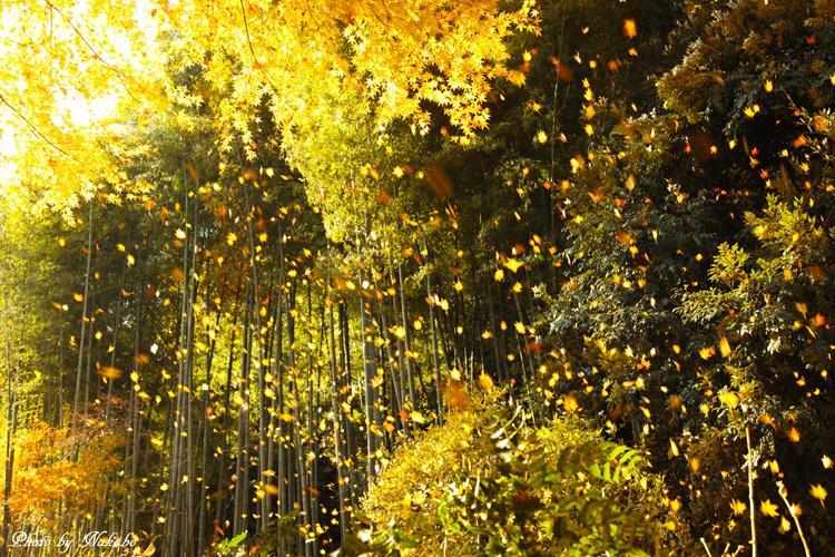Kita-Kamakura_11.jpg