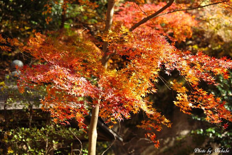 Kita-Kamakura_12.jpg
