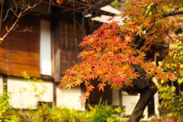 Kita-Kamakura_25.jpg