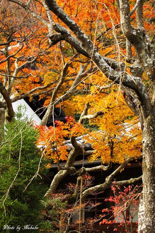 Kita-Kamakura_27.jpg