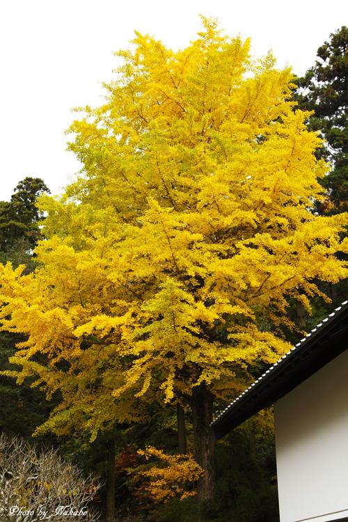 Kita-Kamakura_28.jpg