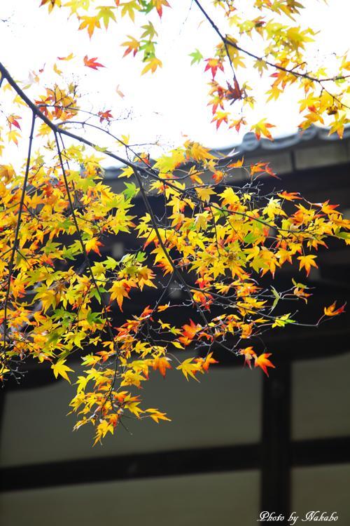 Kita-Kamakura_3.jpg