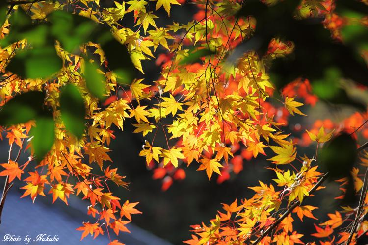 Kita-Kamakura_6.jpg