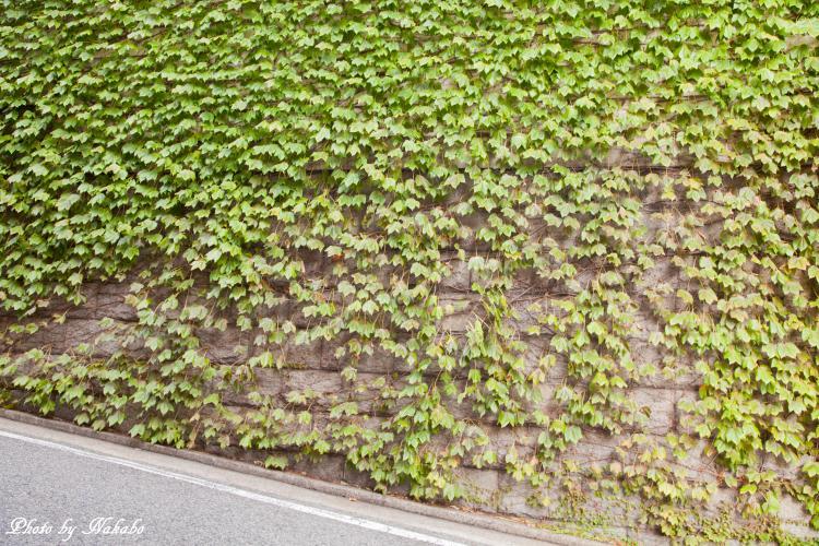 Kobe_62.jpg