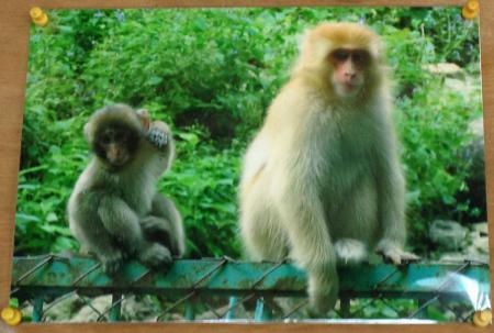 黄金の猿 写真