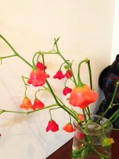 可愛い花!?