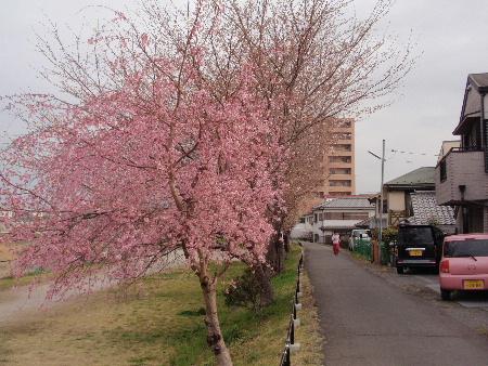 shimofuri.jpg