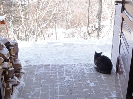 大雪の朝6