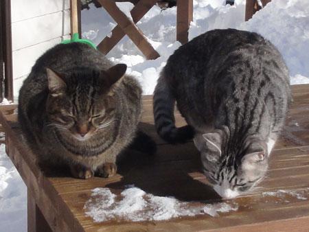 雪のデッキで3
