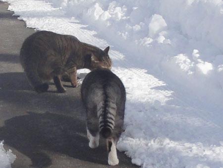 雪の中のお散歩4