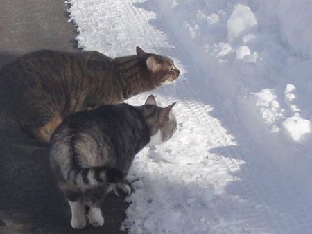 雪の中のお散歩5