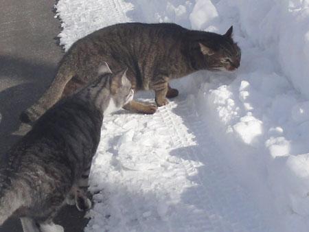 雪の中のお散歩6