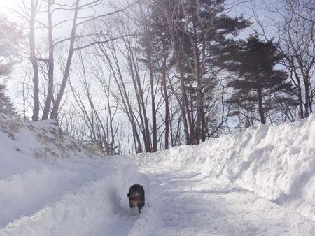 雪の中のお散歩 その21