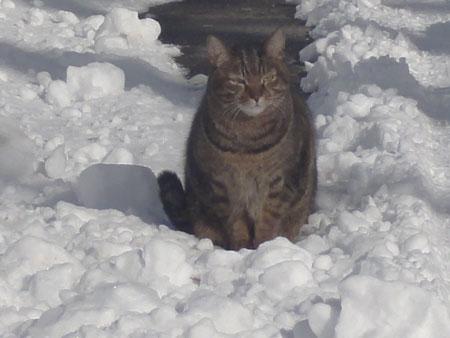 雪の中のお散歩 その23