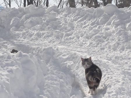 雪の中のお散歩 その24